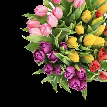 Зріз тюльпана до 8 Березня