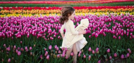 На Волині проведуть масштабний фестиваль тюльпанів