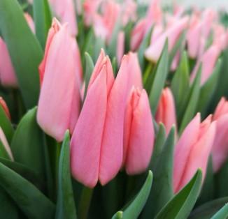 Лососево-рожевий