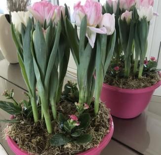 Тюльпани в горщику (3шт)